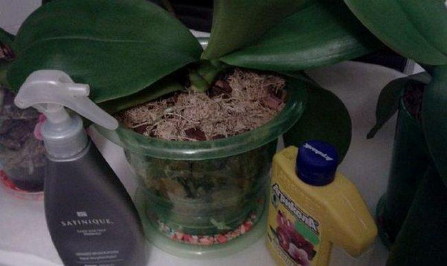 Удобрения для орхидей в домашних условиях