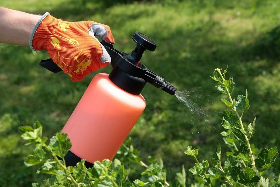 Биофунгициды для растений