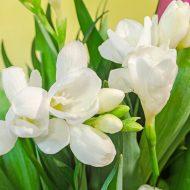 Цветок фрезия посадка и уход фото