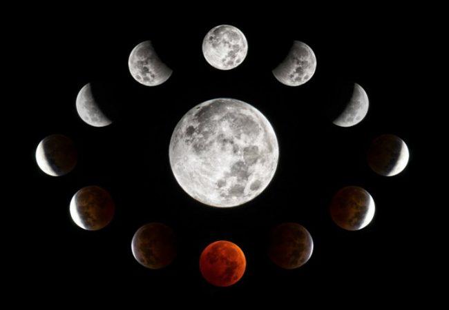 Когда пикировать перцы после всходов по лунному календарю
