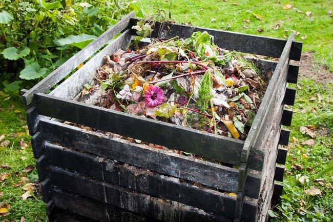 Андрей туманов сад и огород полезные советы