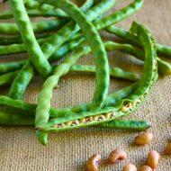 Фасоль спаржевая: выращивание и уход в открытом грунте