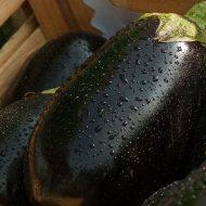 Чем подкормить баклажаны для роста?