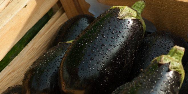 Что делать если плохо растут баклажаны выбираем правильную подкормку