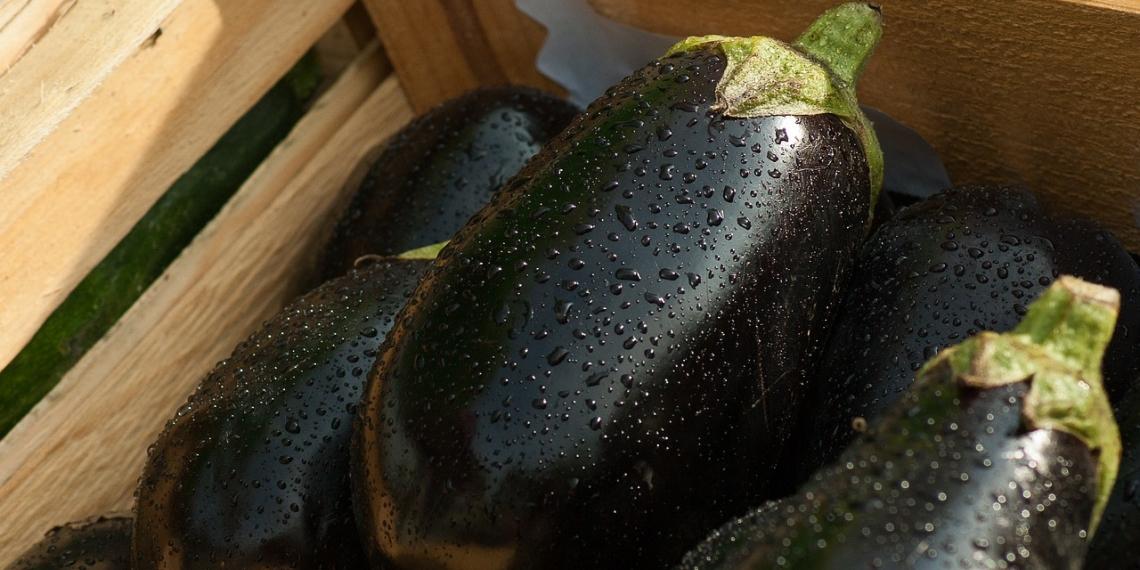Чем подкормить баклажаны для роста