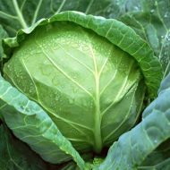 Чем подкормить капусту для формирования кочана?