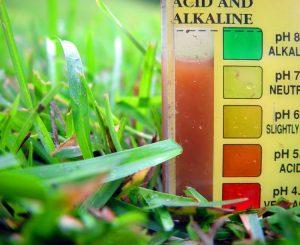 Как определить почву кислая или щелочная