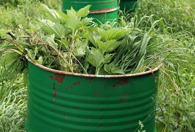 Чем подкармливать огурцы в теплице чтобы был хороший урожай