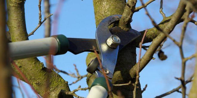 Обрезка плодовых деревьев для начинающих. Как осенью обрезать плодовые деревья