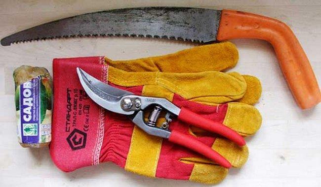 Обрезка ремонтантной малины когда и как правильно ее делать