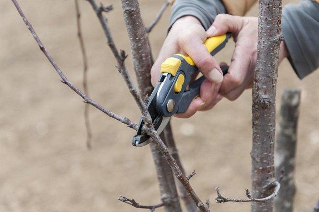 Обрезка вишни осенью для начинающих в картинках пошагово