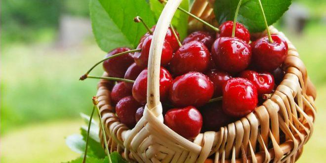 Тонкости осенней обрезки вишни