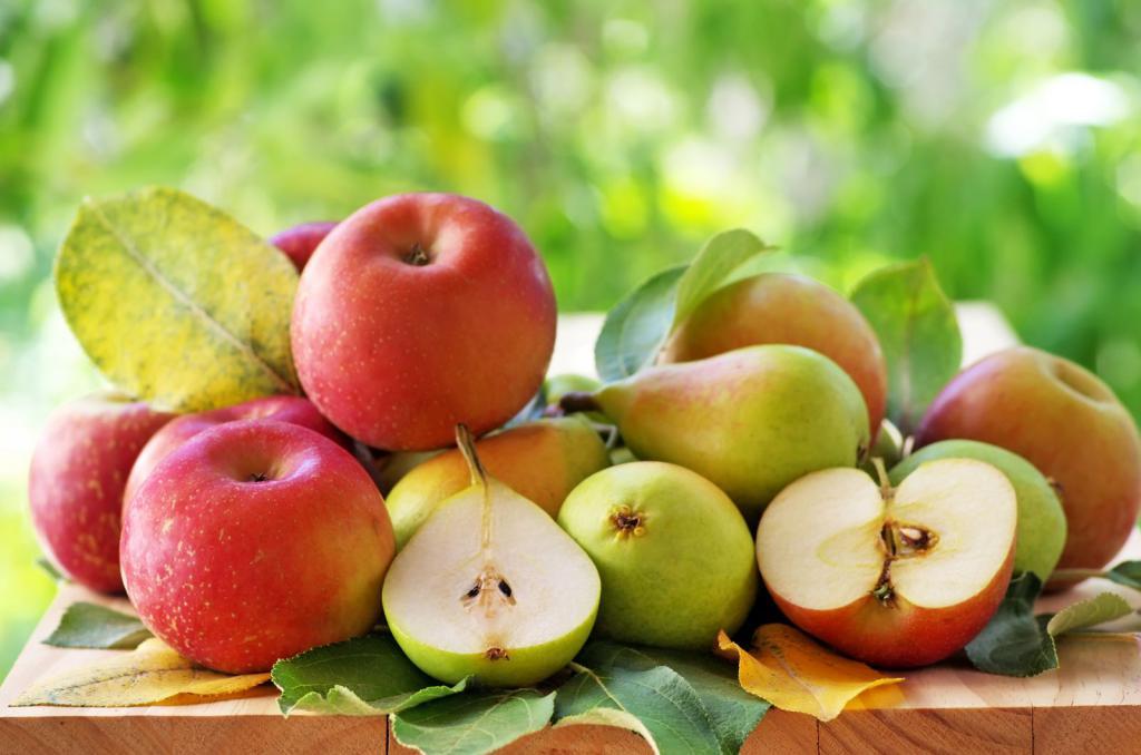 Удобрения для плодовых деревьев и кустарников осенью