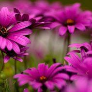 Какие цветы сажать осенью под зиму?