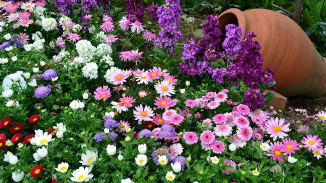 Какие цветы сажать осенью под зиму