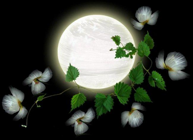 Лунный посевной календарь на март 2019 год цветовода