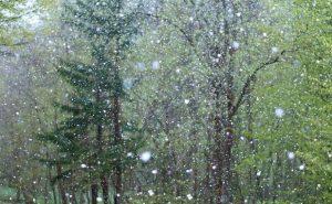 zelenye-derevya-v-snegu