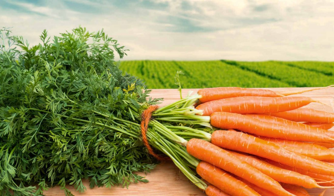 Хранение моркови в домашних условиях на зиму