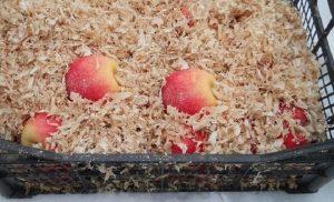 Температура хранения яблок зимой