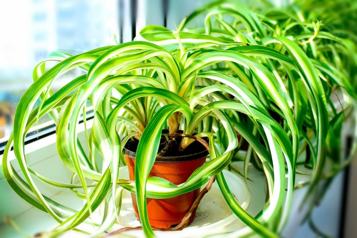 самые полезные комнатные растения фото уникальные стикеры