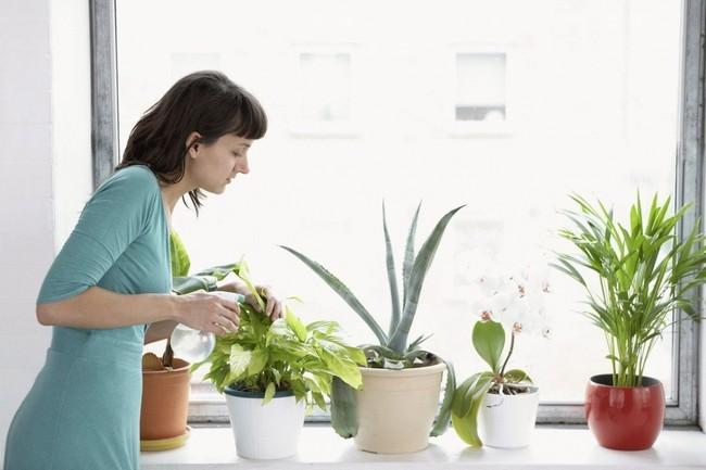 Полив растений перекисью водородаПолив растений перекисью водорода