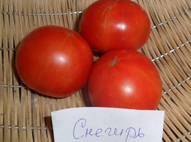 Семена томатов сибирской селекции самые урожайные
