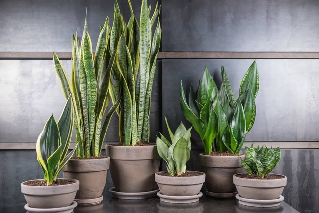 Комнатные растения фото и названия уход в домашних условиях