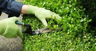 Обрезка декоративных кустарников весной видео для начинающих=