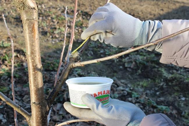 Весенняя обработка деревьев и кустарников от вредителей и болезней
