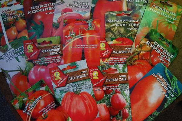 Когда сажать томаты на рассаду в 2019 году по лунному календарю