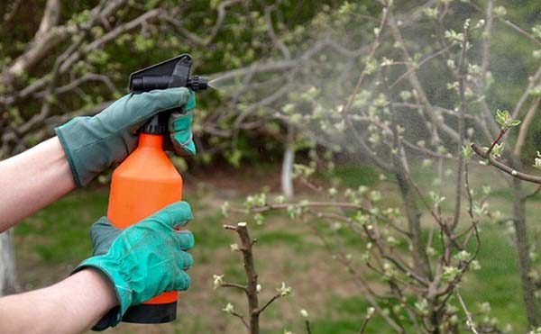 Обработка деревьев весной от вредителей и болезней