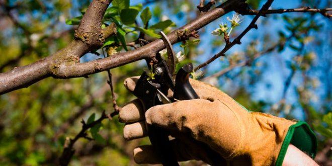 Обрезка деревьев в саду: когда обрезать плодовые деревья, как правильно, сроки
