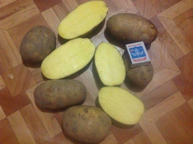 Сорта картофеля с желтой мякотью фото и описание