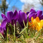 Лунный календарь на апрель 2019 года садовода и огородника