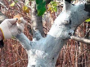 Побелка деревьев весной состав известь и медный купорос
