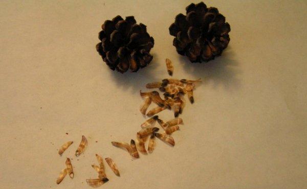 Правильная стратификация семян в домашних условиях: виды и 4 правила