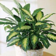20 видов тенелюбивых и теневыносливых растений с названиями и фото