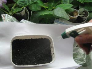 фото razmnojenie geortenzii osenyu