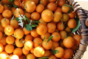 Фото-plody-citrofortunelly-bogaty-vitaminami