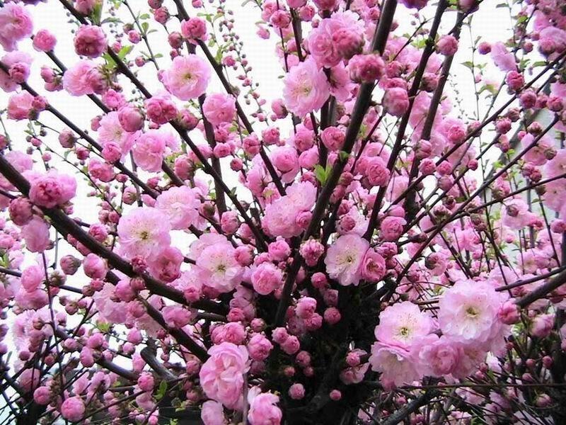 фото-krasivie-cveti