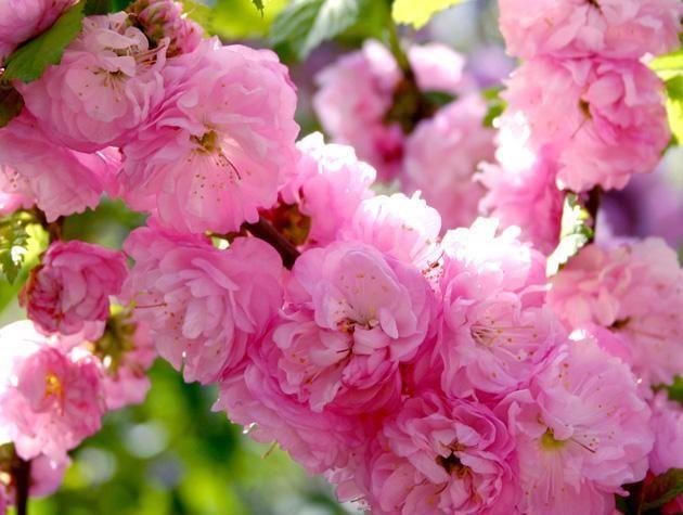 фото-rozoviy-cvetok