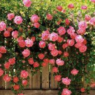 Топ-10 долгоцветущих многолетников для сада