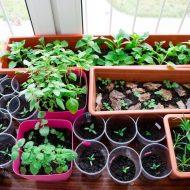 Что сажать в марте на рассаду, перечень растений и благоприятные дни