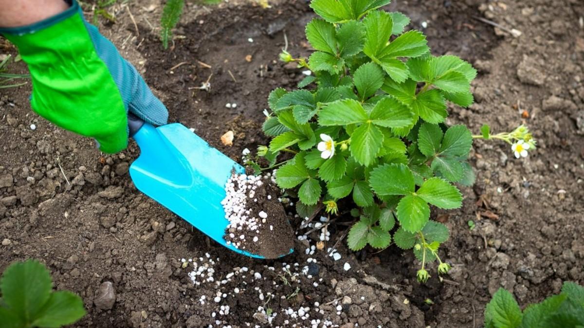 Действенность корневых подкормок проявится, когда гранулы растворятся