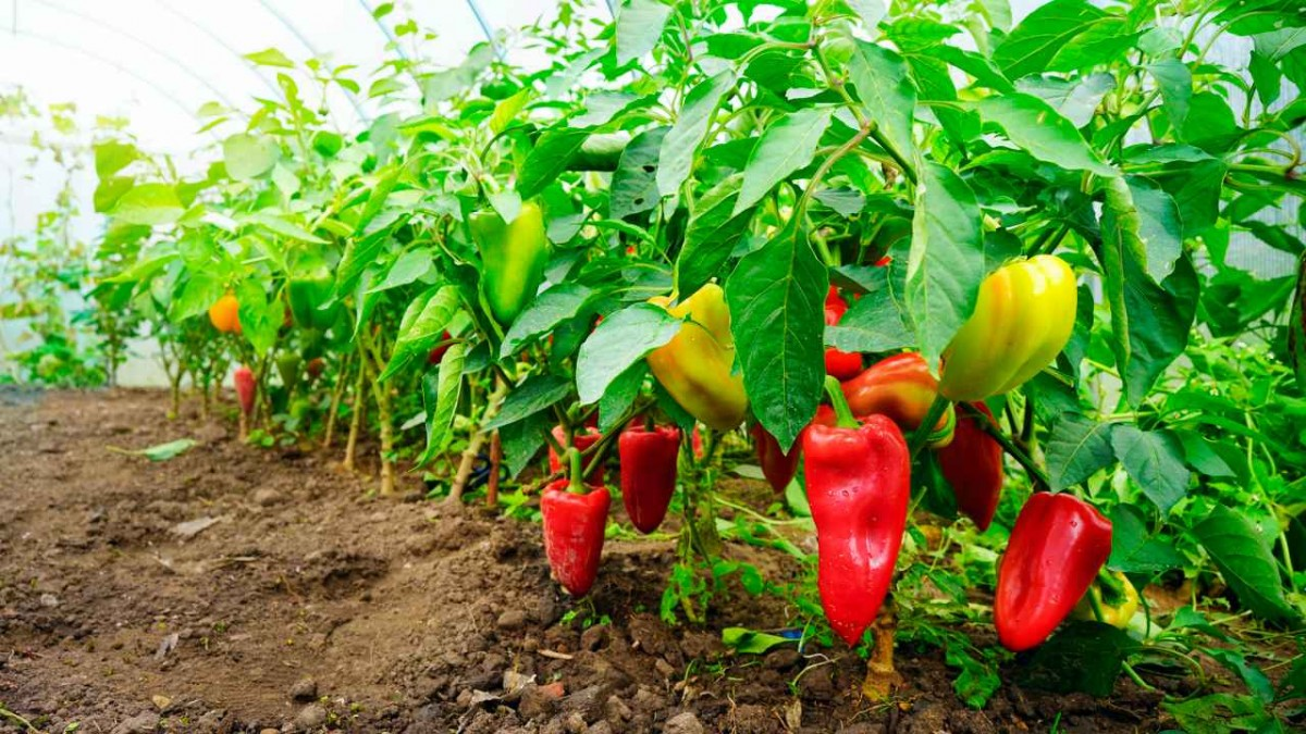 Регулярное сбалансированное питание – главное условие получения урожая