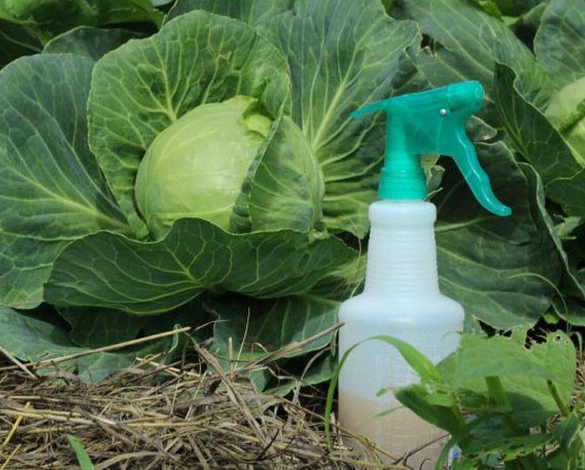 Регулярная обработка спасет урожай