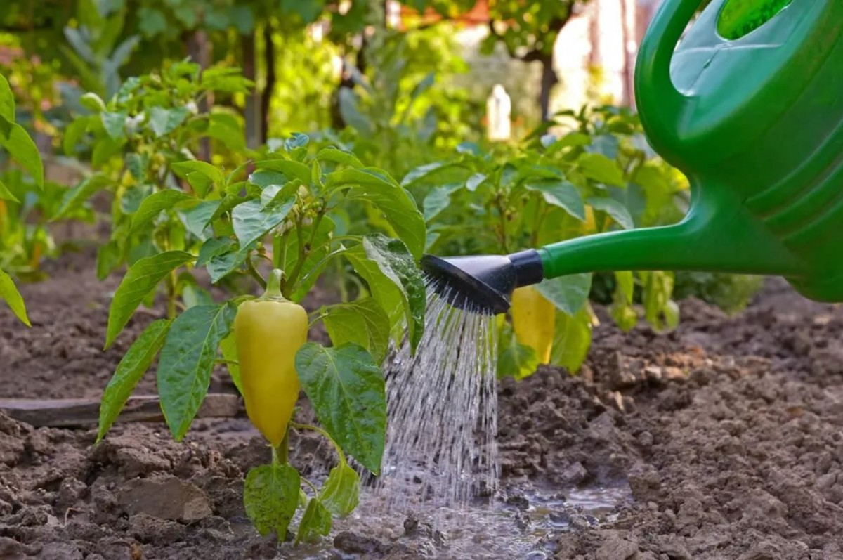 Регулярные удобрения повышают урожайность