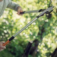 Как выбрать сучкорез для работы с высокими деревьями в саду