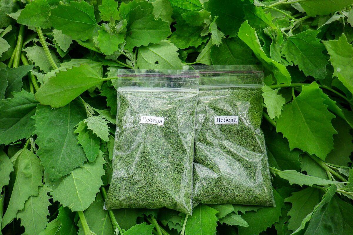 Сушеная зелень не теряет свойств 1 год, семена хранятся 3 года.