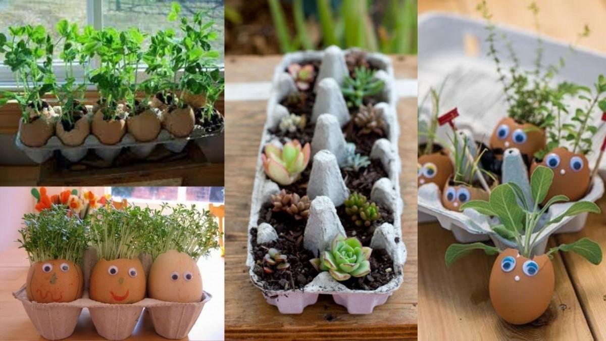 Различные растения в яичных лотках